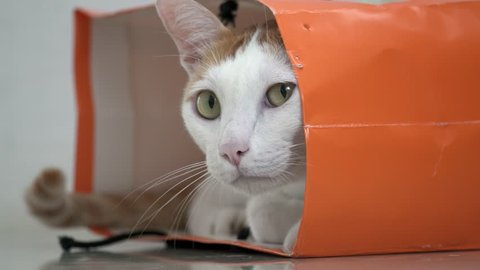 White and Ginger Domestic Cat Sitting in Paper Bag on the Floor. Funy and Playful Pet