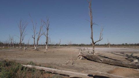 Lake Pond Kings Billabong Wildlife Reserve Dry Drought Barren Lake Bed Snags in Australia