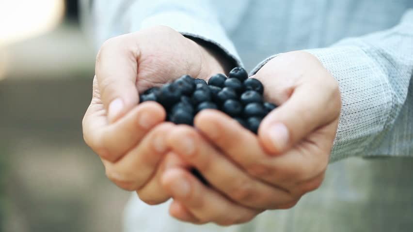 Aronia. Chokeberry in man hand