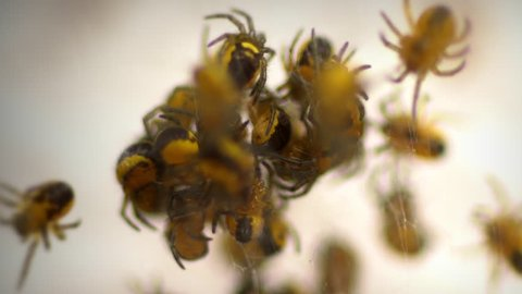 Yellow spider nest close up macro timelapse.