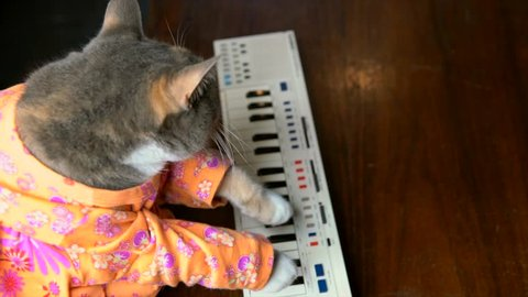 This top view video shows a cute cat in a colorful shirt playing a keyboard piano.
