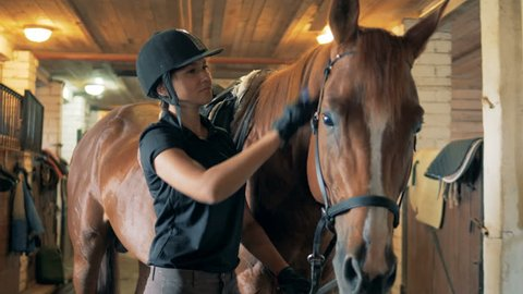 One horsewoman takes care of a horse, close up.