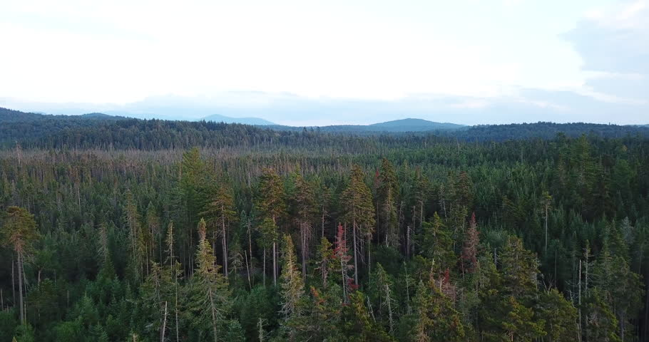 Adirondack Forest Cinematic Stunning Aerial Drone   Shutterstock HD Video #1015529566