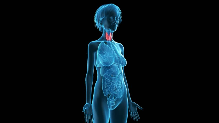 3d rendered medically accurate animation of an older woman´s thyroid   Shutterstock HD Video #1015545916