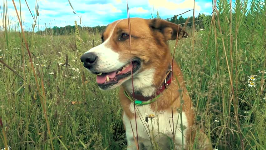 Dog sits in a grass #1015620166
