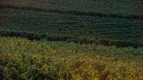 Timelapse  Bordeaux Vineyard at sunrise, Entre deux mers, Gironde, France