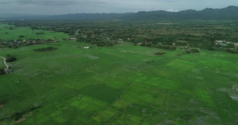 4K Ultra HD Smooth Aerial Shot Forward over Beautiful Rice Fields in Thailand