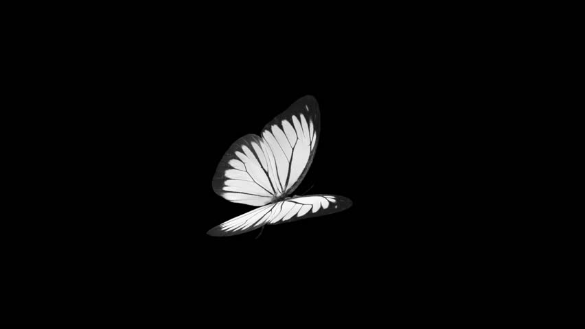 Butterfly - White Cabbage  - Flying Loop - Alpha Channel - 3D animation of realistic model ready to fly by your custom moving path. | Shutterstock HD Video #1015806106