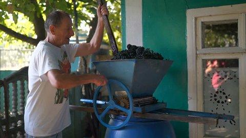 Vintner using manual vintage crusher on grapes, traditional artisanal wine.