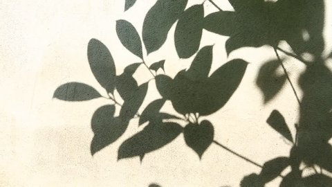 Leaves  shadow on the wall, chiangmai  Thailand