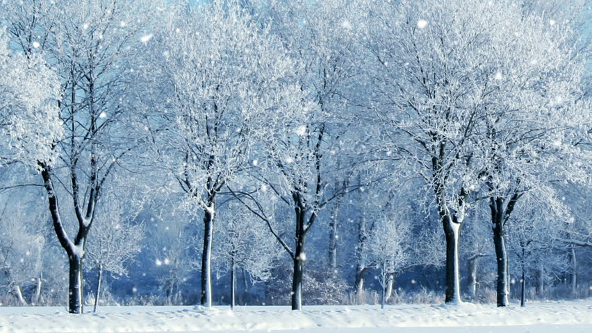 Winter forest background  | Shutterstock HD Video #1016057836