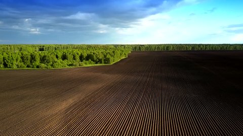 wonderful aerial motion above boron field rows without sprouting by green forest under blue sky with clouds