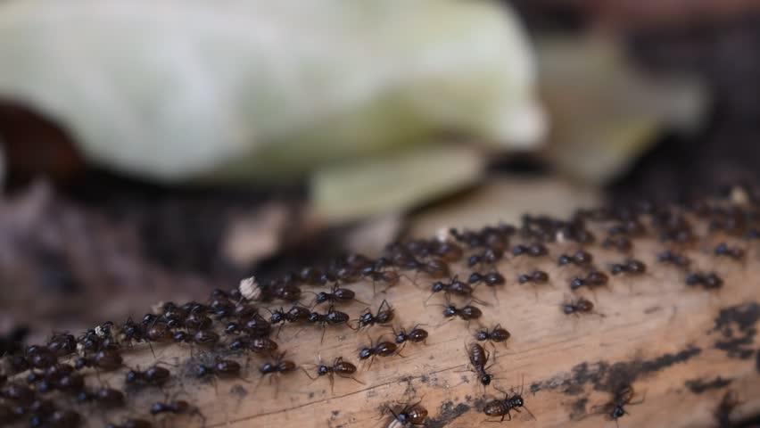 black ant walking on timber