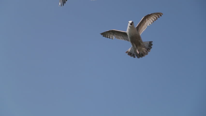 Seagulls flying in the blue sky. Seagull is Swimming into the water. City viewing. Dublin province. | Shutterstock HD Video #1016302006
