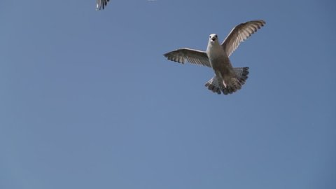 Seagulls flying in the blue sky. Seagull is Swimming into the water. City viewing. Dublin province.