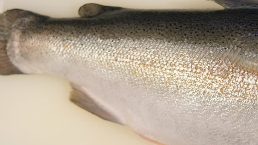 Fresh raw salmon. | Shutterstock HD Video #1016362666