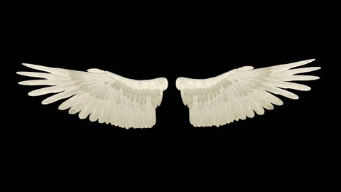 wings flap, loop, animation, transparent background