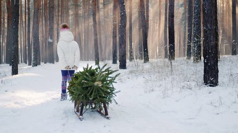 A little girl is carrying a Christmas tree on a wooden sled. Goes through the snow-covered forest, the sun's rays shine through the trees. Soon Christmas concept