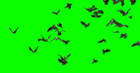 bats Halloween birds green screen footage alpha