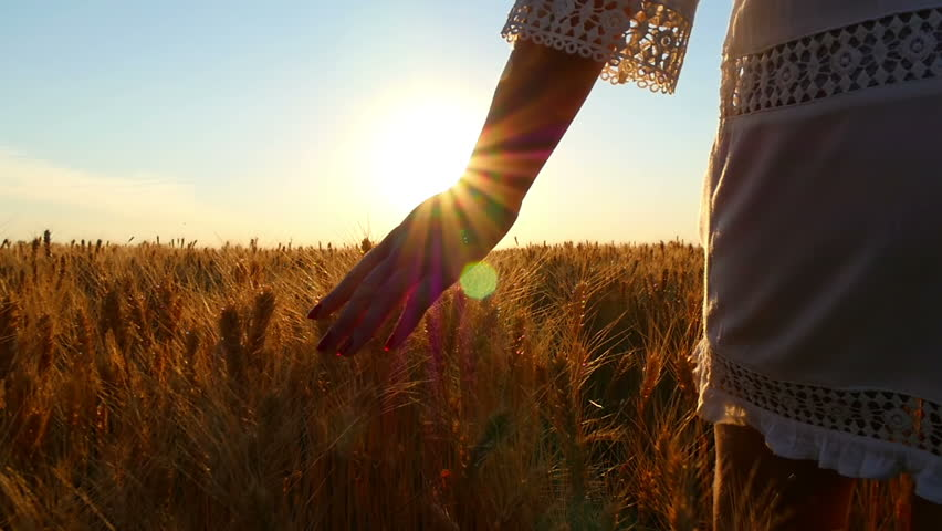 The hand of a young girl in slow motion touches the spikelets of wheat in the field against the background of the sunset. Close-up #1016498446