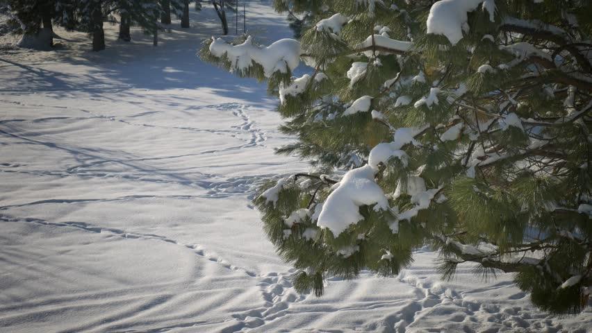 Sunny snow day 02   Shutterstock HD Video #1016794936