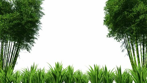 bamboo forest overlay realistic 3d stock footage video 100 royalty free 1016819716 shutterstock bamboo forest overlay realistic 3d stock footage video 100 royalty free 1016819716 shutterstock