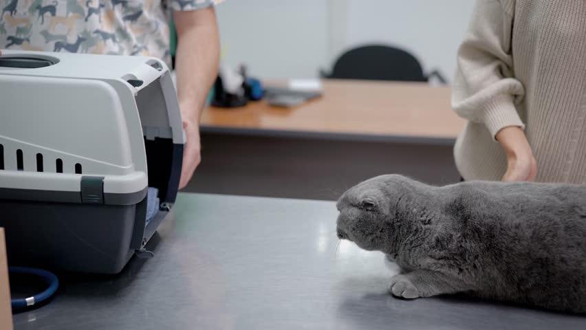 Gray cat entering pet carrier | Shutterstock HD Video #1016823016