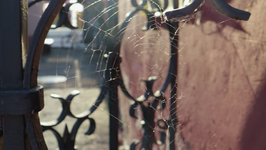 White web stretched among the bars of the old metal fence, in the courtyard of the sunset light. Close up | Shutterstock HD Video #1016961766