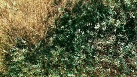 Top down aerial footage of long grass blowing in the wind