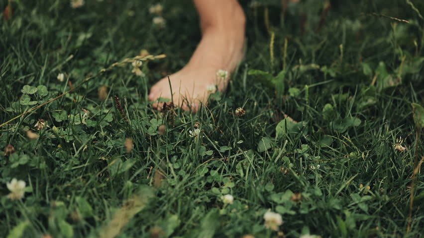 Woman's Feet Walking on the Green Summer Grass with Field Flowers. Close-up Shot. Summer Time