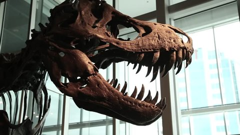 T-rex fossilized skeleton dramatically lit and cinematically shot