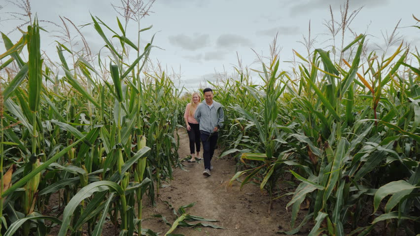Young multiethnic couple walks through the corn maze. Fairgrounds and Fun at Halloween in the USA.   Shutterstock HD Video #1018151686