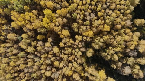AERIAL: Flying above the stunning colorful treetops with turning leaves on sunny day. Beautiful autumn trees in yellow, orange and red forest on sunny autumn day. Fall foliage in autumn forest