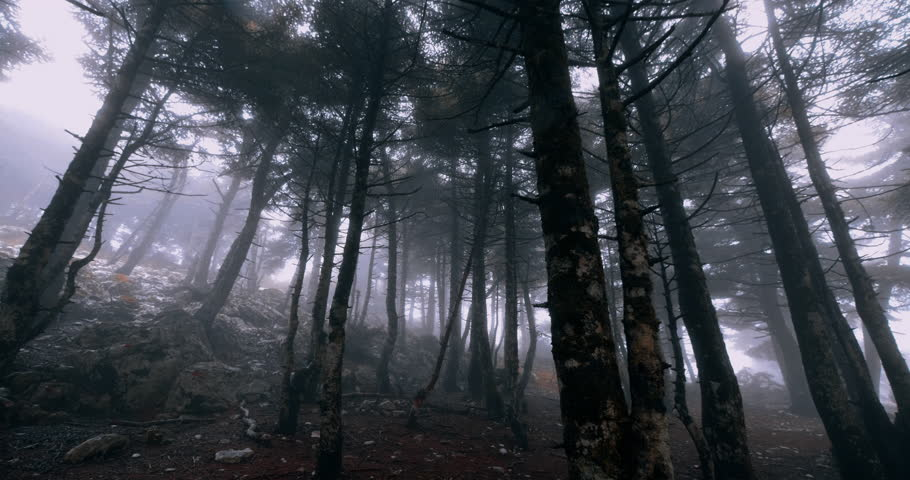 Scary mystical dark foggy autumn/winter forest in motion.Gimbal steadicam movement as we walk in or past a fairy tale like forest with tall fir trees in heavy fog smoke and mist.Originated in10bit. | Shutterstock HD Video #1018479016