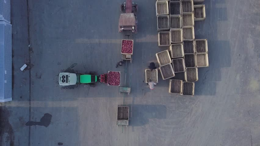 Warehouse workers are preparing an empty crate for apples. Loader is relocating pallet with apples in the territory of warehouse for further transportation to the plant for the production of juice. Ae | Shutterstock HD Video #1018576426