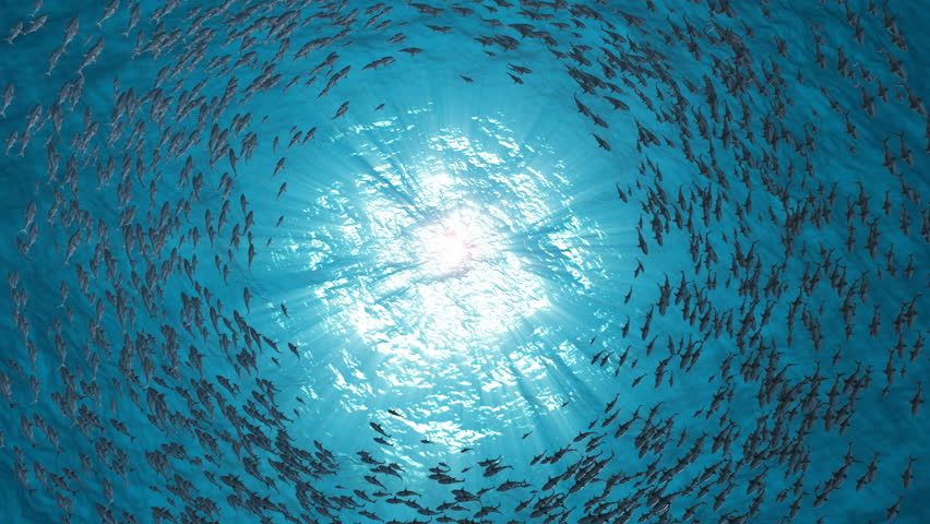 School Of Fish.Sharks swim in a circle. #1018611226