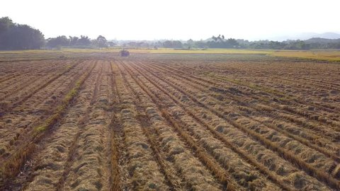 Aerial view, flying low over paddy field with track of harvesting machinery on ground. Flight over cornfield. Agriculture industry concept.