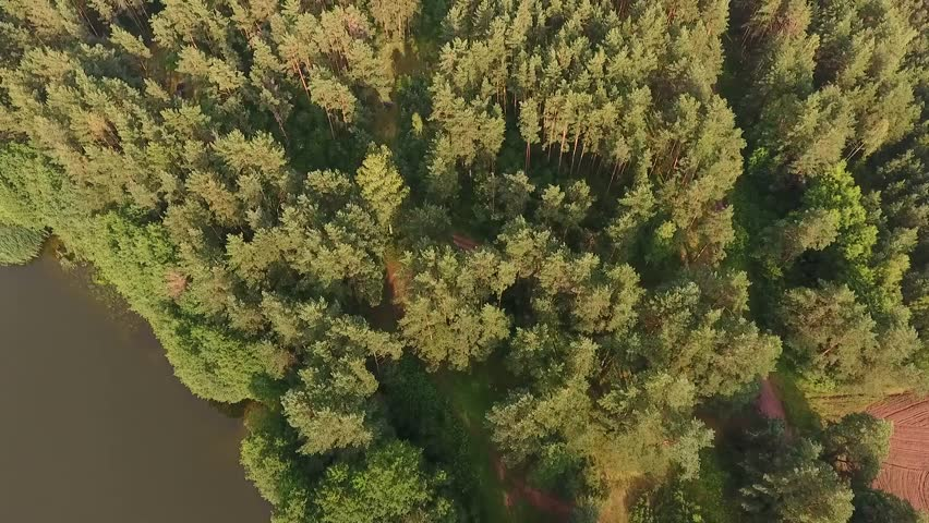 Aerial drone shot over the european forest in Belarus | Shutterstock HD Video #1019226736