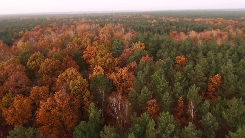 View from the top down to the autumn forest. Aerial view. 4k.  | Shutterstock HD Video #1019265196