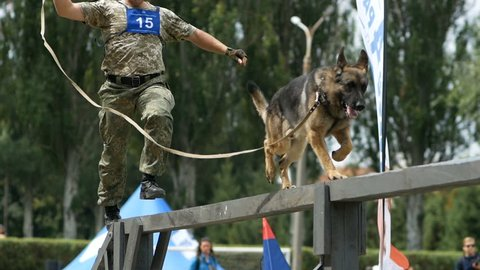 A k9 police officer with service dog german shepherdom runs an obstacle course on competition of canine national polices