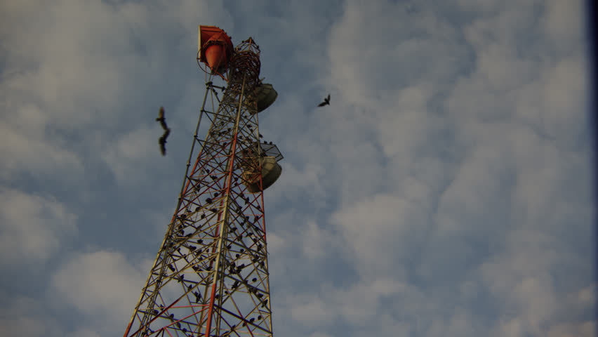 Vulture /  Vultures Bird Committee in Flight and Overtaking Communications Tower | Shutterstock HD Video #1019699416
