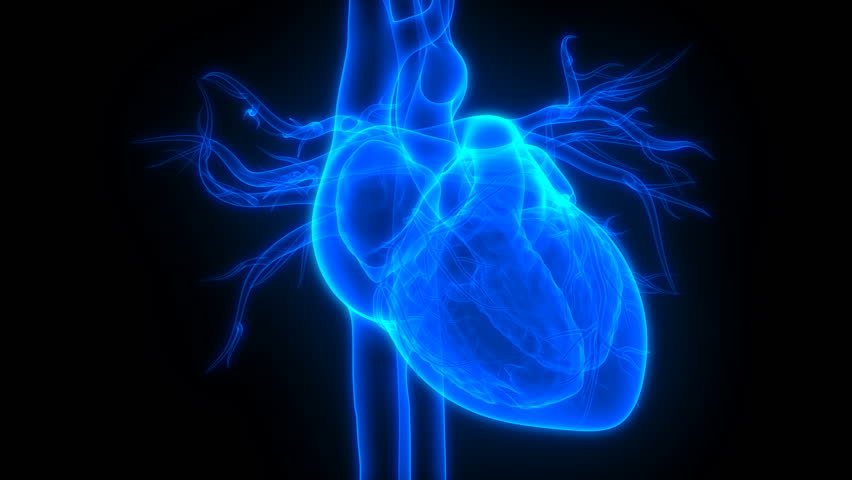 Human Heartbeat Anatomy. 3D   Shutterstock HD Video #1019990086