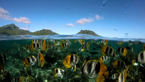 Over under sea surface ,tropical fish ,Pacific ocean, French Polynesia
