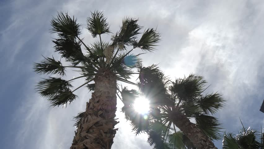 The sun peeking through palm trees on The Strip, Las Vegas Boulevard, Las Vegas, Nevada, USA | Shutterstock HD Video #1020556186
