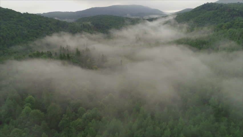 The camera flies over the mountain forest in the fog. The Carpathian Mountains. Summer. Countryside of Ukraine. Morning. Aerial footage. 4K | Shutterstock HD Video #1020563446