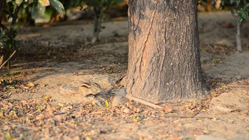 Squirrel Eating Food Near a Stock Footage Video (100% Royalty-free)  1020704986 | Shutterstock