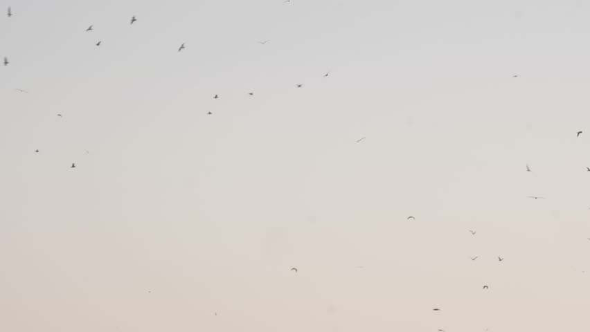 Many seagulls flying together | Shutterstock HD Video #1021123786