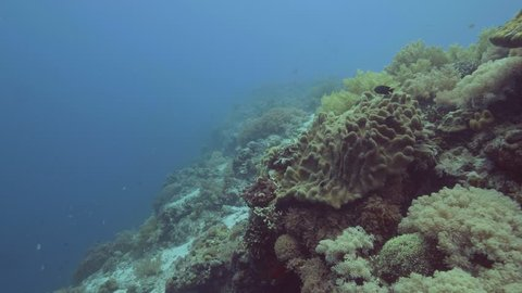 Underwater shooting while scuba diving. Sea fish swimming on coral reef landscape. Swimming fish among beautiful coral on sea bottom. Underwater world and marine life.