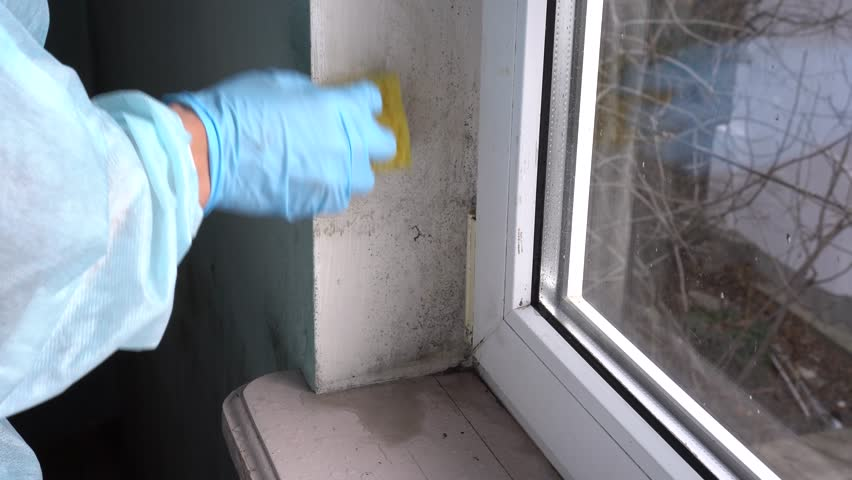 Cleaning Up Mold From A Window Woman Wall Using Spray Bottle And Sponge