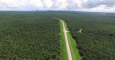 aerial view of palm oil plantation at Gomanting Sabah, Borneo. aerial footage